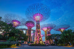 Night view of The Supertree Grove at Gardens by the Bay  in Sing Stock Photos