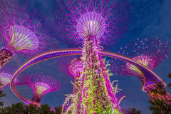 Night view of The Supertree Grove at Gardens by the Bay  in Sing Stock Photography