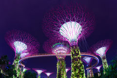 Night view of Supertree Grove at Gardens by the Bay in Singapore Royalty Free Stock Image