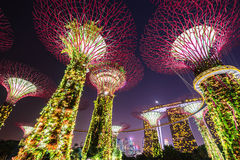 Night view of The Supertree Grove at Gardens near Marina Bay, Singapore. February 22 2015: Night view of The Supertree Grove at Gardens near Marina Bay. Gardens Royalty Free Stock Images