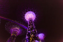 Night view of the Supertree Grove in the Graden by the Bay in Si Stock Photo
