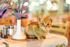 Night view to little cat sitting on restaurant table stock image