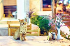 Night view to little cat sitting on restaurant table royalty free stock image