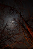 Night view of trees illuminated by campfire against the moon Royalty Free Stock Photography