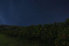 Night vineyard background. Night starry sky. Night sky with star Stock Photo