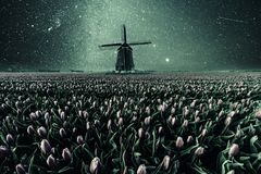 Night Vintage Field of Tulips and Windmill. Night field of tulips and windmill. Vintage landscape with stars and flowers. Traditional Holland view Royalty Free Stock Photography
