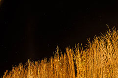 Night Wall Grass Stock Images