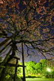 Night of weeping plum Royalty Free Stock Images