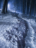 Night Winter Forest Royalty Free Stock Photos