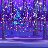 Night winter forest background Royalty Free Stock Image
