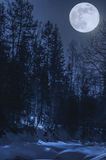 Night, winter forest in the moonlight Stock Photos
