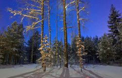 Night winter forest Stock Image