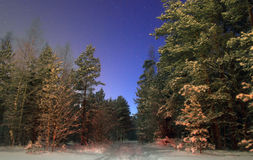 Night winter forest Stock Photo