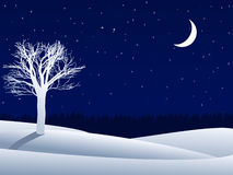 Free Night Winter Landscape Royalty Free Stock Photo - 16989135