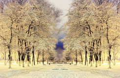 Night winter landscape. In the alley of city park Royalty Free Stock Image