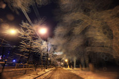Night winter landscape. In the alley of city park Stock Images