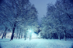 Night winter landscape. In the alley of city park Stock Photos