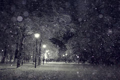 Night winter landscape. In the alley of city park Royalty Free Stock Images