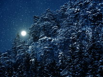 Night winter landscape. Beautiful winter landscape with snow covered trees Stock Images