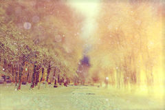 Night winter landscape in park. Night winter landscape in the alley of city park Stock Photos