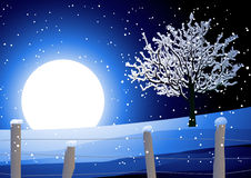 Night winter landscape with tree stock image