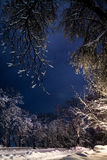 Night of the winter landscape. The trees are beautifully covered in snow Royalty Free Stock Photos
