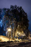 Night of the winter landscape. The trees are beautifully covered in snow Royalty Free Stock Photo