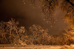 Night of the winter landscape. The trees are beautifully covered in snow Royalty Free Stock Image