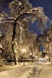 Night of the winter landscape. The trees are beautifully covered in snow Stock Photography