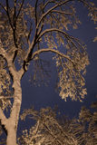 Night of the winter landscape. The trees are beautifully covered in snow Stock Photo