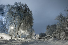 Night of the winter landscape. The trees are beautifully covered in snow Stock Image