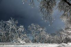 Night of the winter landscape. Stock Photo