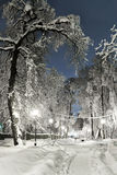 Night of the winter landscape. The trees are beautifully covered in snow Stock Images