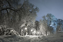 Night of the winter landscape. The trees are beautifully covered in snow Stock Photos