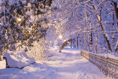 Night winter park. Snow-covered bench in winter park lit lanterns Stock Image