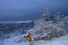 Night winter picture Royalty Free Stock Photo