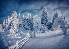 Night winter scene in the mountain forest Stock Photography