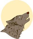 Night wolf Royalty Free Stock Photos