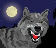 Night wolf. The image of the growling wolf on a background of the full moon Royalty Free Illustration