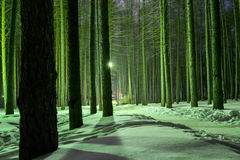 Nightime in a Winter Forest Royalty Free Stock Photo