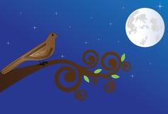 Nightingale Stock Image
