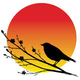 Nightingale royalty illustrazione gratis