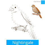 Nightingale bird learn to draw vector Stock Image