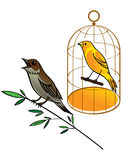 Nightingale and Canary. In golden cage Stock Image