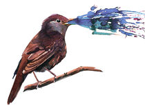 Nightingale Stock Photography