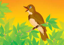 Nightingale. Singing nightingale perched on a branch of a tree Royalty Free Stock Photography