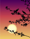 Nightingales at sunset. Vector drawing. Spring romantic scene. Nightingale meeting at sunset Stock Photography