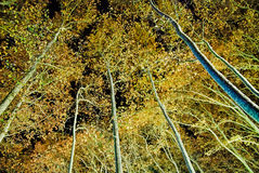 Nightly autumn trees Royalty Free Stock Images