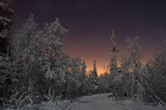 Nightly forest. Lunar night is in the forest Royalty Free Stock Photo