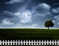 Nightly meadow. Stock Image